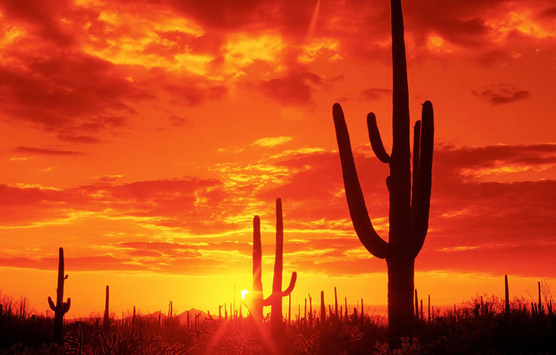 How to have a fantastic trip to tucson arizona sciox Images